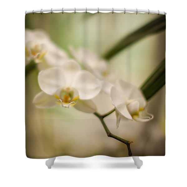 Delicate Romance Lace Shower Curtain by Mike Reid
