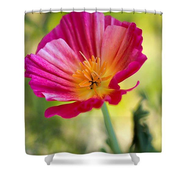 Delightful Shower Curtain by Heidi Smith