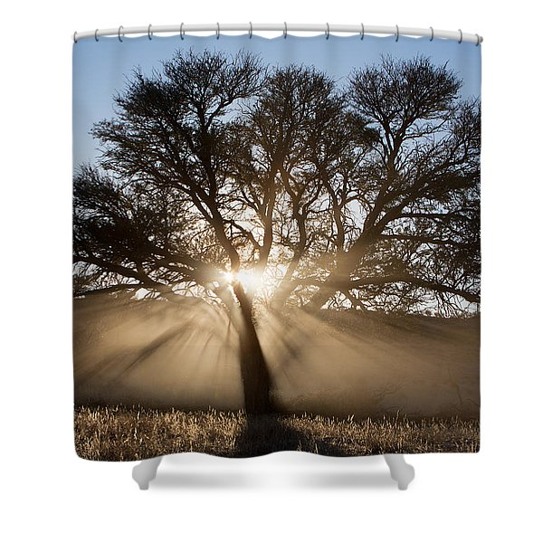 Desert Tree Shower Curtain by Max Waugh
