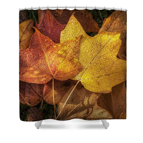 Dew on Autumn Leaves Shower Curtain by Scott Norris