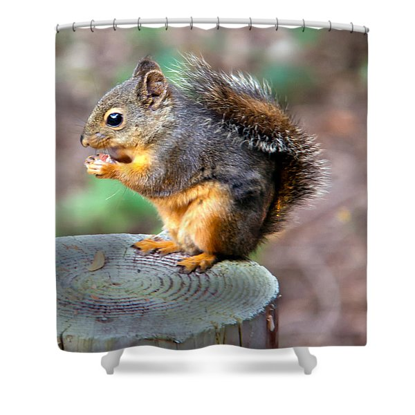 Dinner Time Shower Curtain by Robert Bales