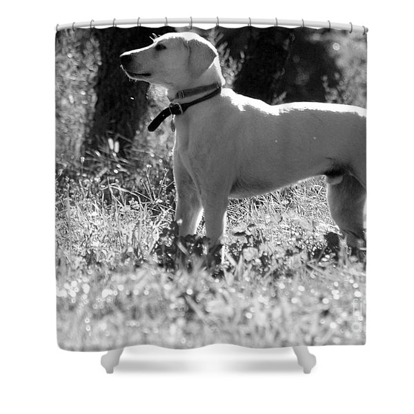 Dog On Guard Shower Curtain by Kathleen Struckle