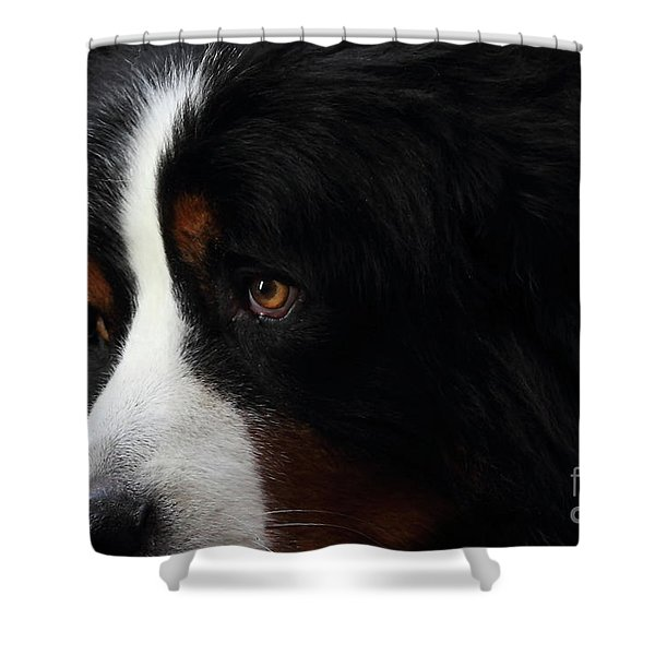 Dog Shower Curtain by Wingsdomain Art and Photography