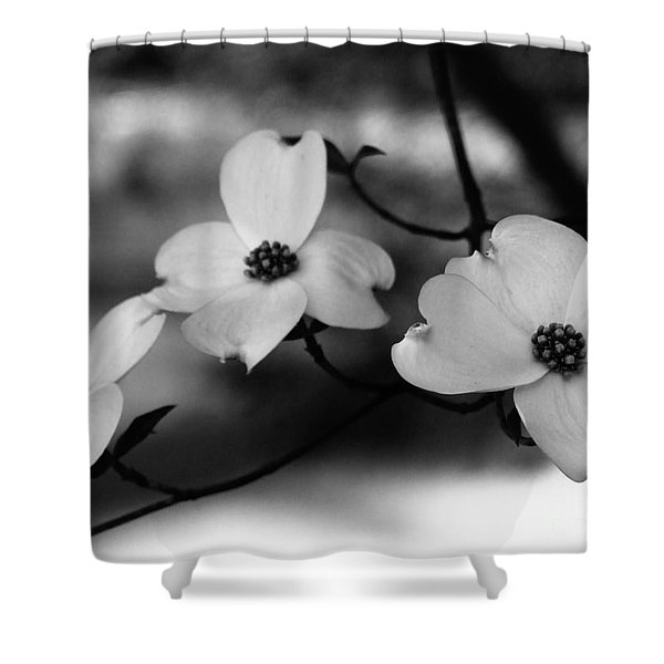 Dogwood Black And White Shower Curtain by Andrea Anderegg