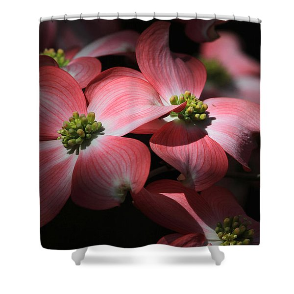 Dogwood Blossoms Shower Curtain by Donna Kennedy