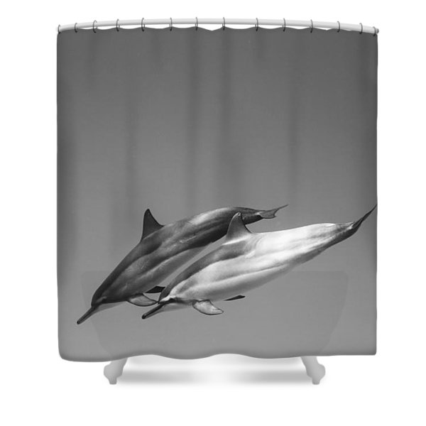 Dolphin Pair Shower Curtain by Sean Davey