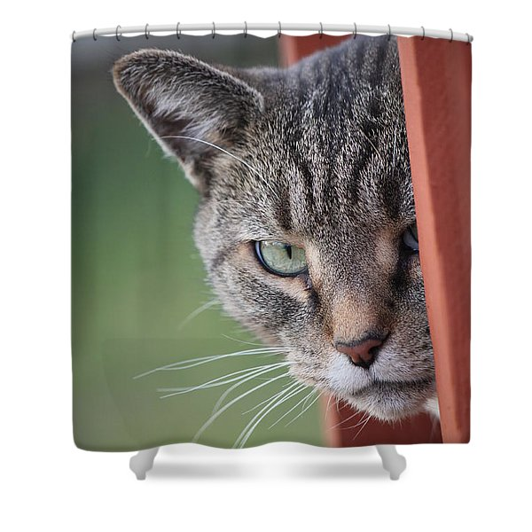 Don't Mess With Gilbert Shower Curtain by Jennifer Doll