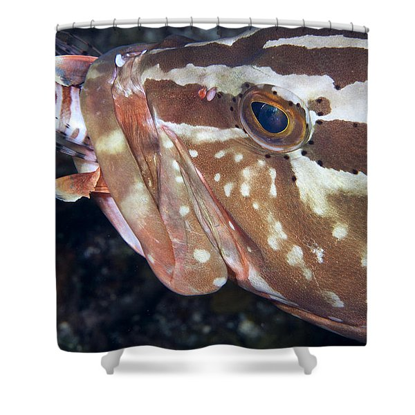 Down the Hatch Shower Curtain by Jean Noren