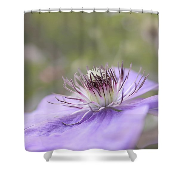 Dreaming Shower Curtain by Kim Hojnacki
