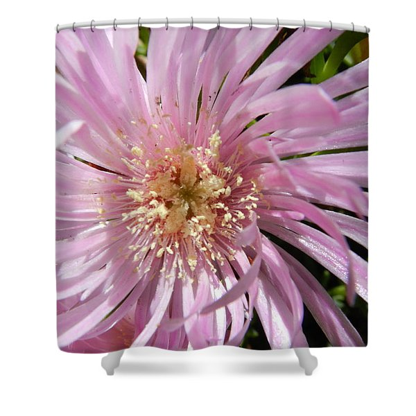 Dressed In Pink Shower Curtain by Leana De Villiers