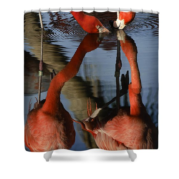 Dual Flamingo Reflections Shower Curtain by Dave Dilli