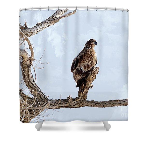 Eagle Eye Shower Curtain by Lori Tordsen