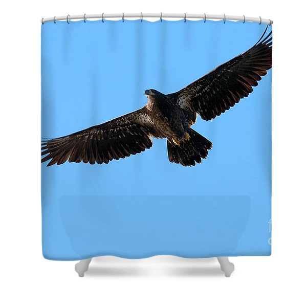 Eagle Wings Shower Curtain by Sharon  Talson