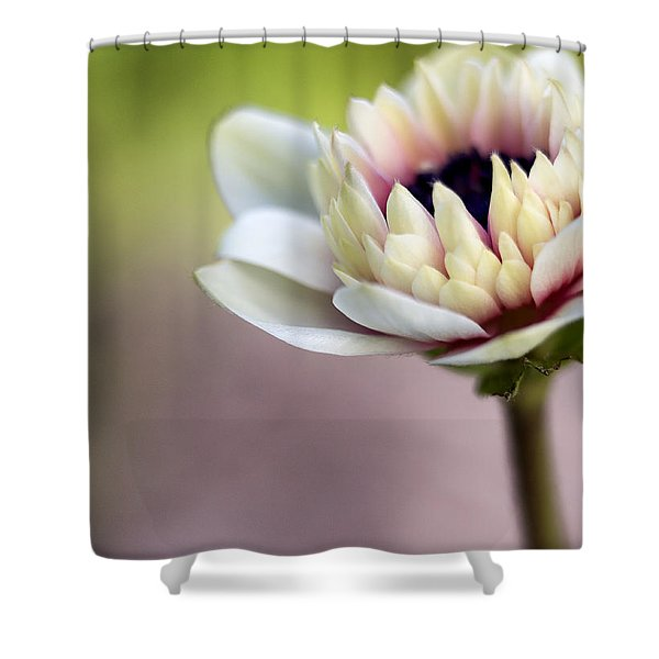 Early Spring  Shower Curtain by Caitlyn  Grasso