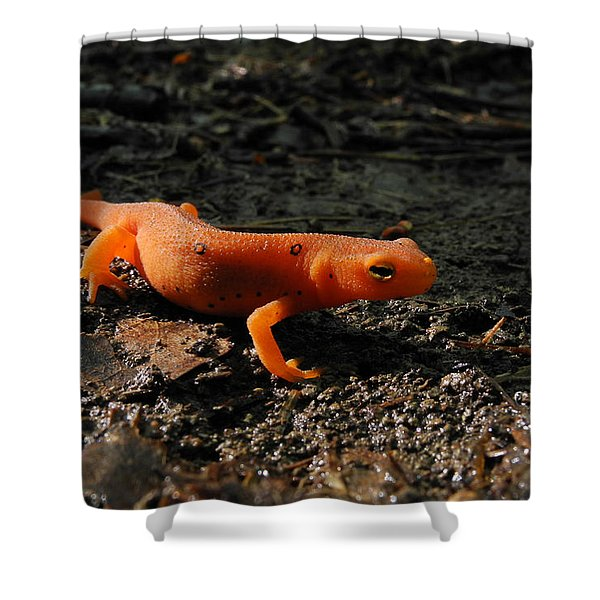Eastern Newt Red Eft Shower Curtain by Christina Rollo