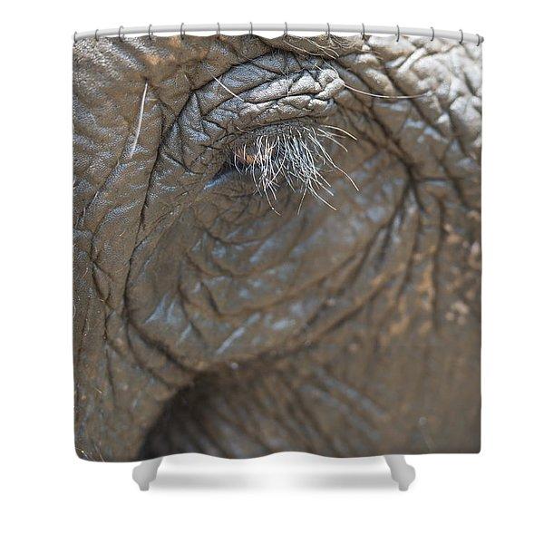 Elephant Eye Chiang Mai, Thailand Shower Curtain by Stuart Corlett