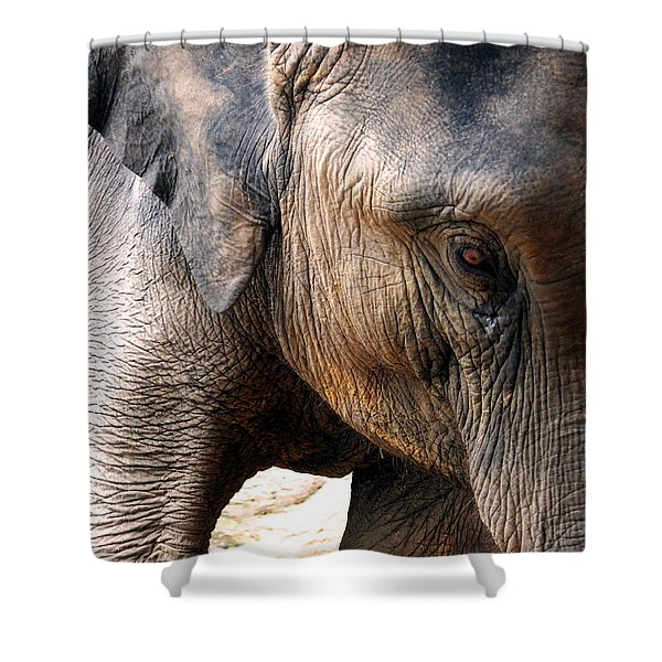 Elephant's Eye Shower Curtain by Justin Woodhouse