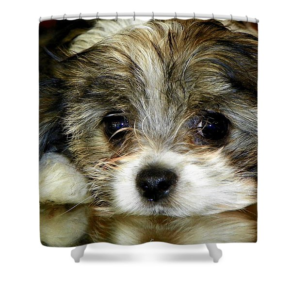 Eyes On You Shower Curtain by Karen Wiles