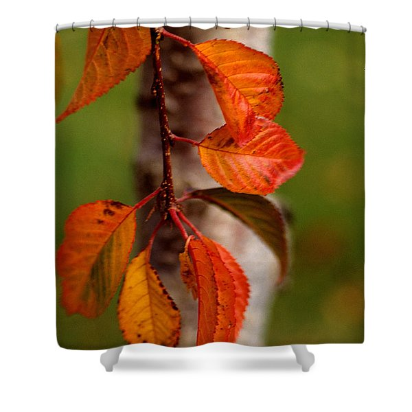 Fall Beauty Shower Curtain by Sharon Elliott