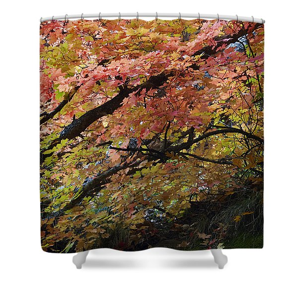 Fall Leaves at West Fork Arizona Shower Curtain by Dave Dilli