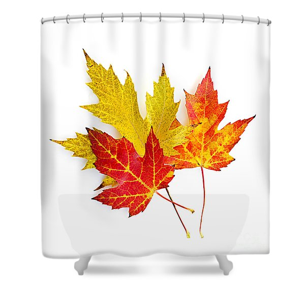 Fall Maple Leaves On White Shower Curtain by Elena Elisseeva