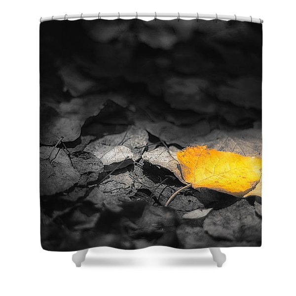 Fall Shower Curtain by Scott Norris