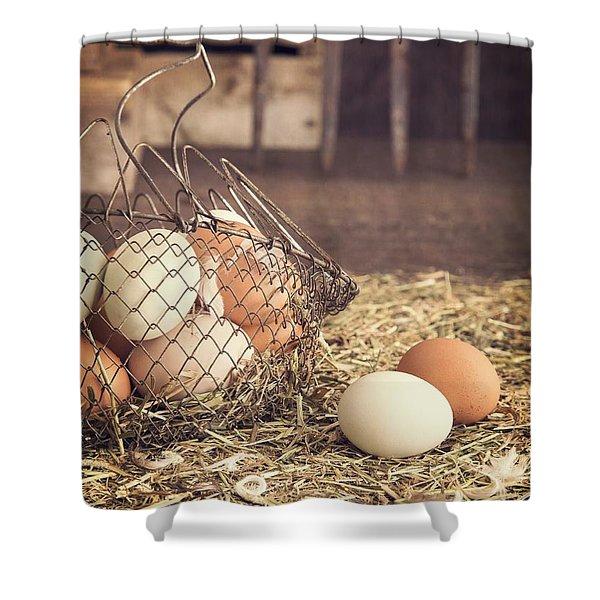 Farm Fresh Eggs Shower Curtain by Edward Fielding