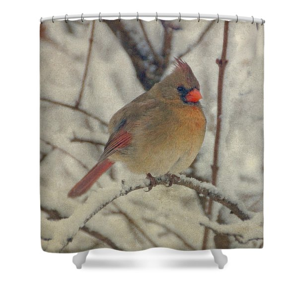 Female Cardinal In The Snow II Shower Curtain by Sandy Keeton