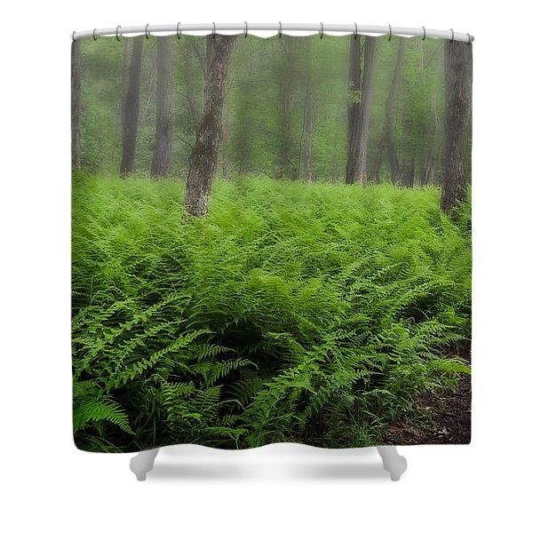 Fern of the Fog Shower Curtain by Bill  Wakeley
