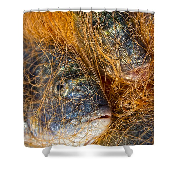 Fish On The Net Shower Curtain by Stylianos Kleanthous