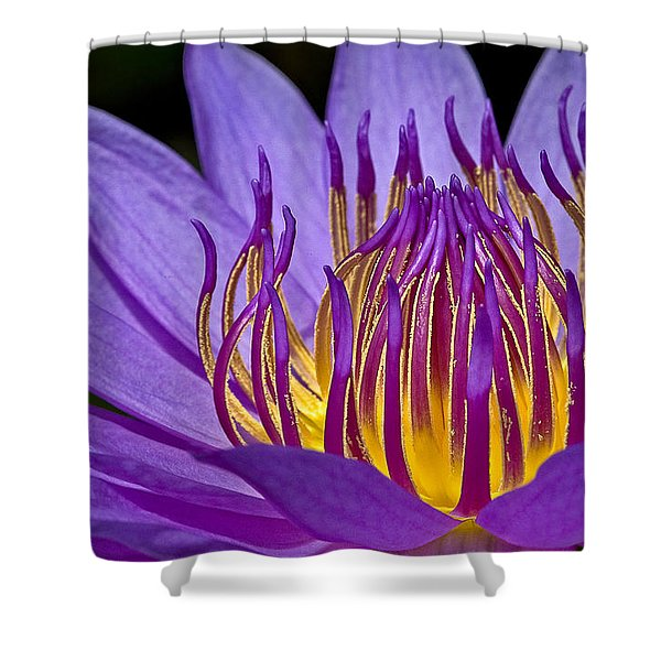 Flaming Heart Shower Curtain by Susan Candelario