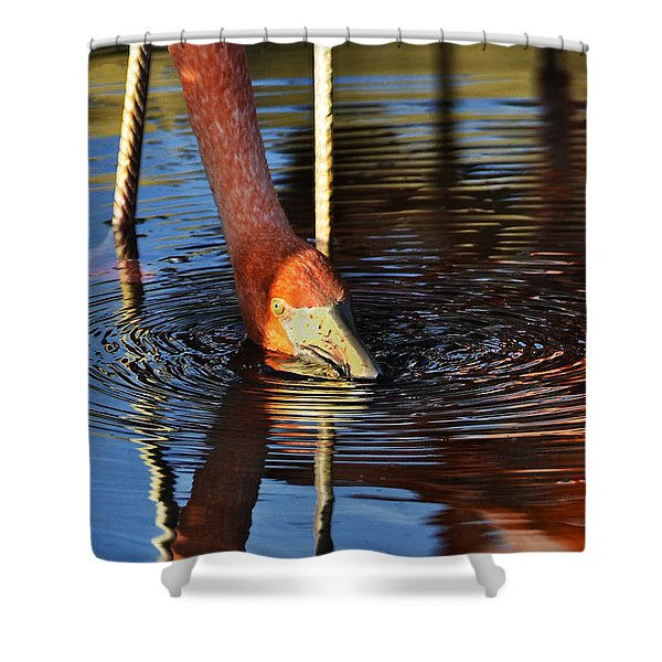 Flamingo Close Up Shower Curtain by Dave Dilli