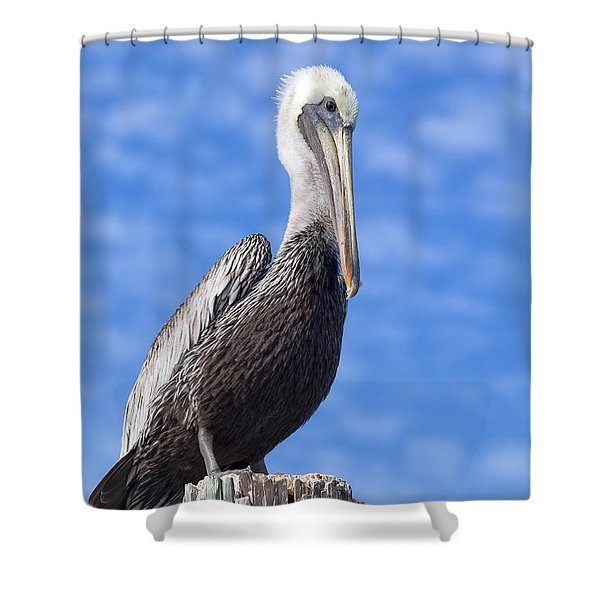 Florida Brown Pelican Shower Curtain by Kim Hojnacki