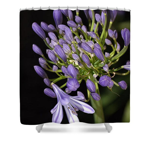 Flower- Agapanthus-blue-buds-one-flower Shower Curtain by Joy Watson
