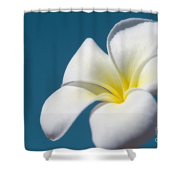 Flower In The Sky Shower Curtain by Sharon Mau