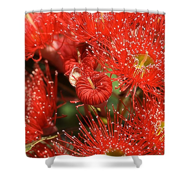 Flowers-red Eucalyptus-australian Native Flora Shower Curtain by Joy Watson