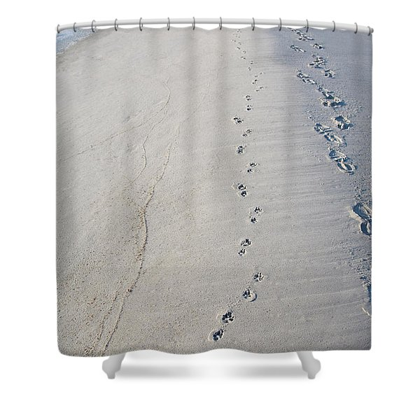Footprints and Pawprints Shower Curtain by Diane Macdonald