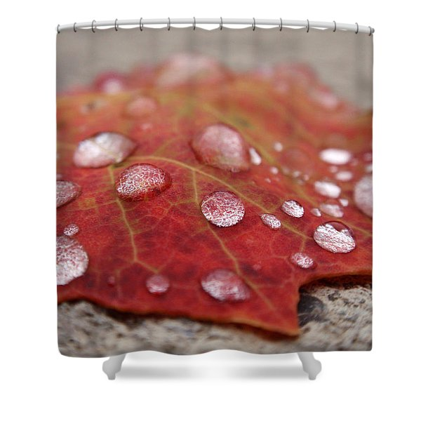 Fresh Drops Shower Curtain by Christina Rollo
