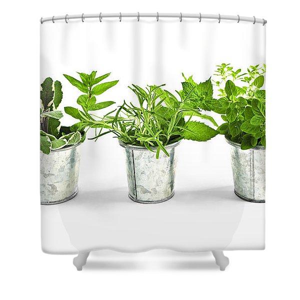 Fresh herbs in pots Shower Curtain by Elena Elisseeva