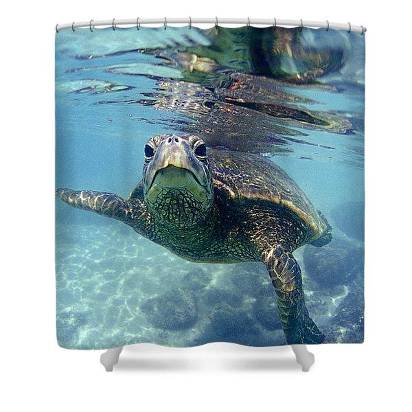 friendly Hawaiian sea turtle  Shower Curtain by Sean Davey