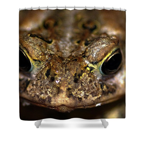 Frog 2 Shower Curtain by Optical Playground By MP Ray
