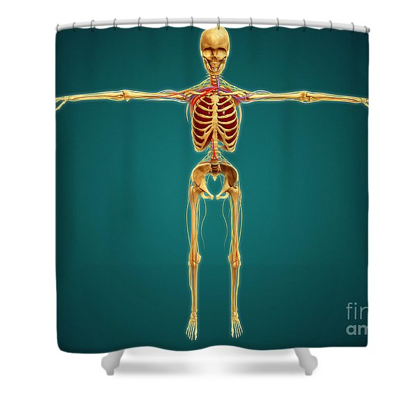 Front View Of Human Skeleton Shower Curtain by Stocktrek Images