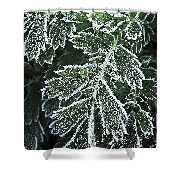 Frosty leaves macro Shower Curtain by Elena Elisseeva
