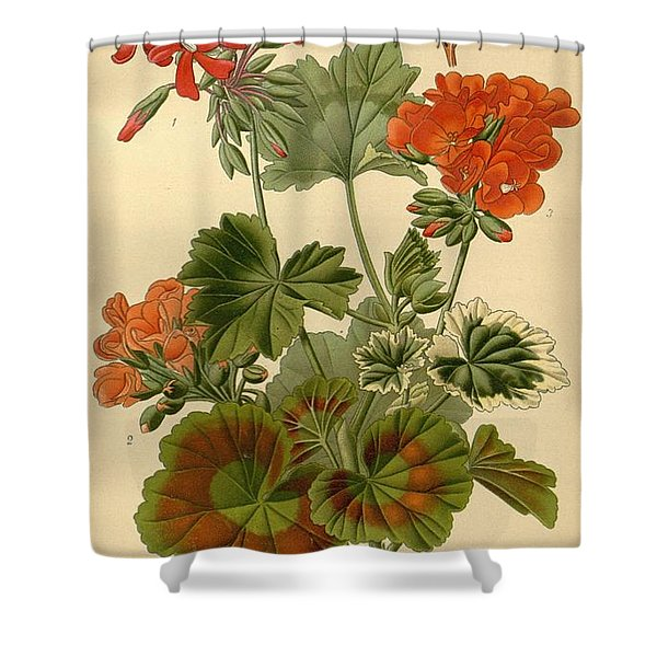 Geraniums Shower Curtain by Philip Ralley