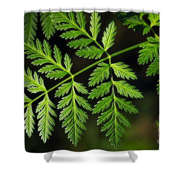 Gereric vegetation Shower Curtain by Carlos Caetano