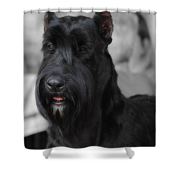 Giant Schnauzer Shower Curtain by Jai Johnson