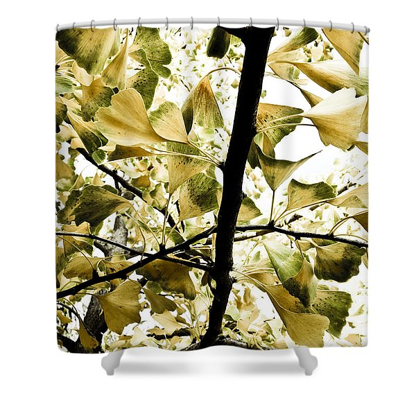 Shower Curtains - Ginkgo Leaves Shower Curtain by Frank Tschakert