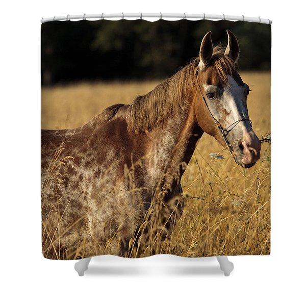 Giraffe Horse D7330 Shower Curtain by Wes and Dotty Weber