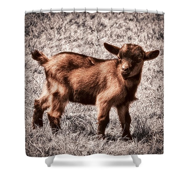 Gizmo Shower Curtain by Wim Lanclus
