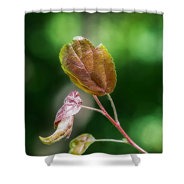 Glossy Nature - Featured 3 Shower Curtain by Alexander Senin